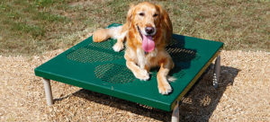 Paws Grooming Table
